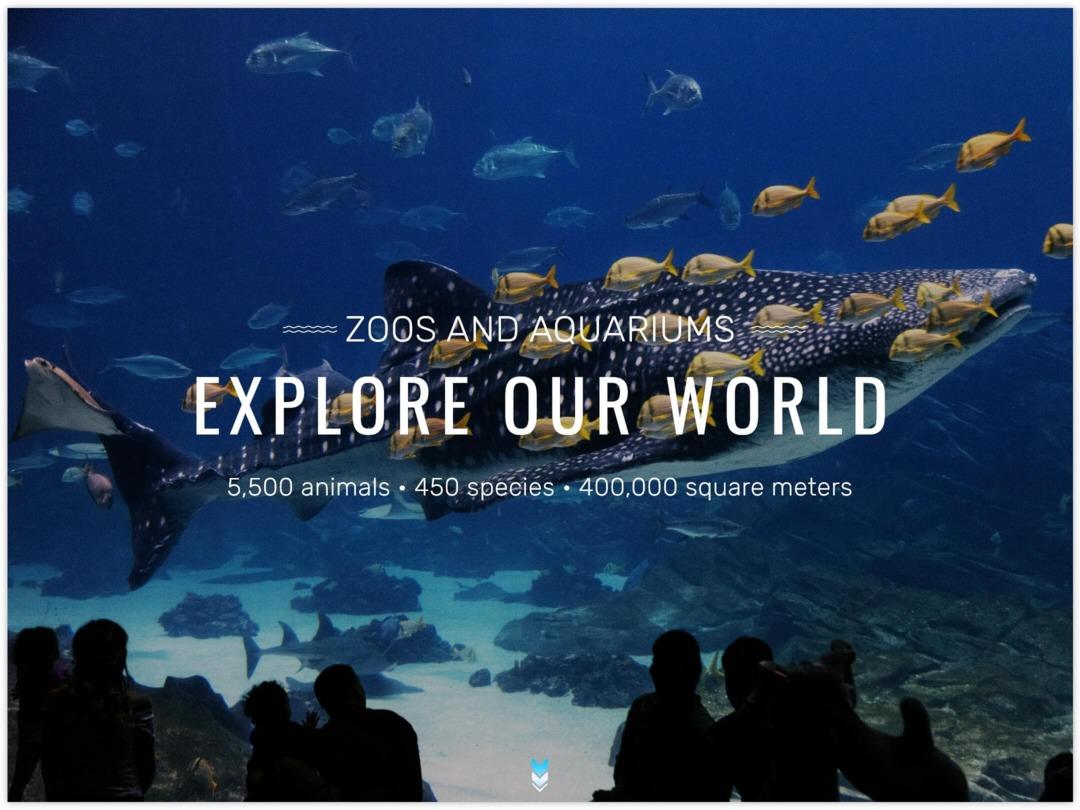 zoo-website-homepage-design-nilead-top-banner