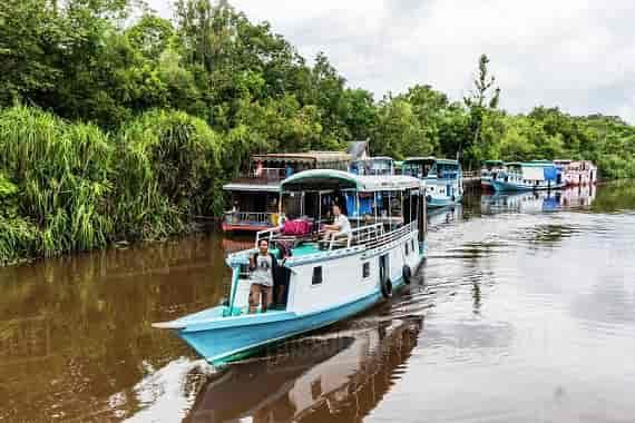 Kalimantan Orangutan Explorer