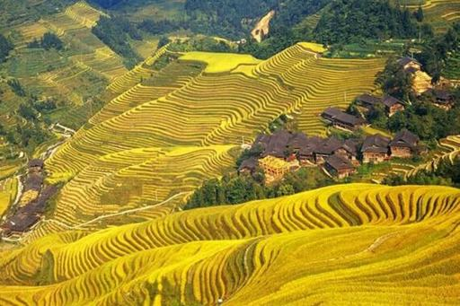 Longsheng Rice Paddy Fields