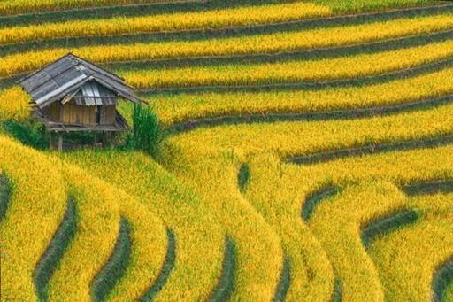 Vietnam Natural Wonder: Mu Cang Chai Valley
