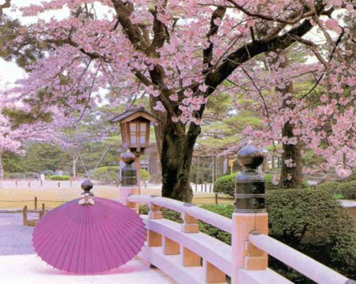 When is the best time to visit Japan - March (2)