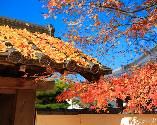 When is the best time to visit Japan - October