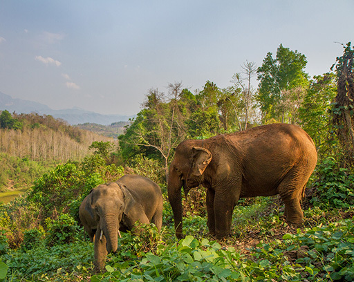 When is the best time to visit Laos - July